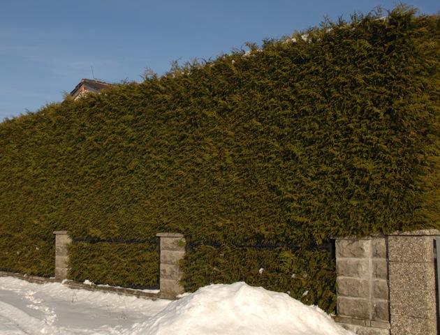 Die Neonazi-Immobilie in Obermenzing ist hinter meterhohen Hecken verborgen.  Foto: a.i.d.a.